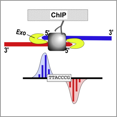 Chip Exo Diagram